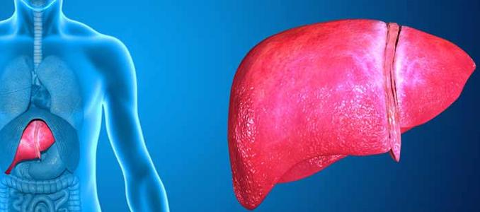 Профилактическое лечение печени: лучше раньше, чем позже