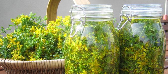 Травы для лечения печени: самые эффективные сборы и настойки