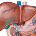 Поликистоз печени: причины, лечение, диагностика