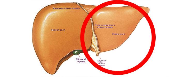 Увеличение левой доли печени: причины и лечение проблемы
