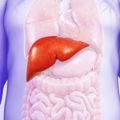 Ожирение печени: симптомы и лечение