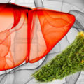 Лечение народными средствами кисты печени