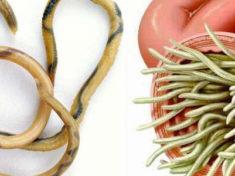 Описторхоз: симптомы и лечение